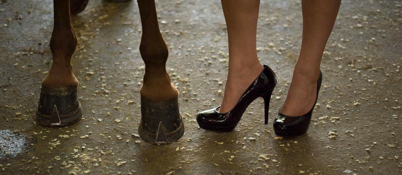 saddlebreds and stilettos